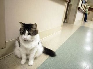 oscar-cat2